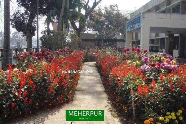 meherpur_018EAE61AEA-9DD8-FA5D-C191-68290F324E31.jpg
