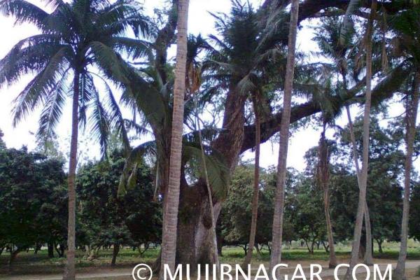 amjhupi-nilkuthi_00628AE1EAF-F7BA-AE91-A446-C3DF23C12268.jpg