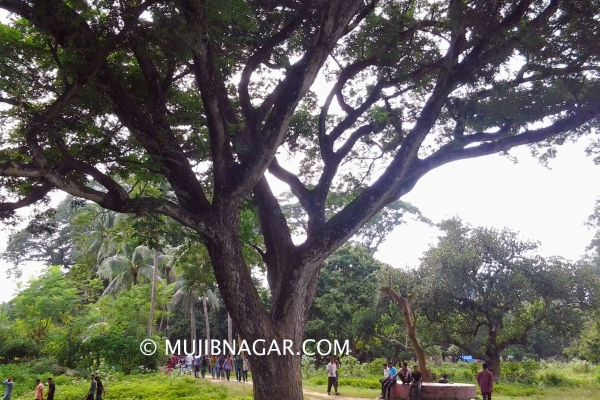 amjhupi-nilkuthi_01834166D37-549B-EB77-03D1-12C1237B92B1.jpg