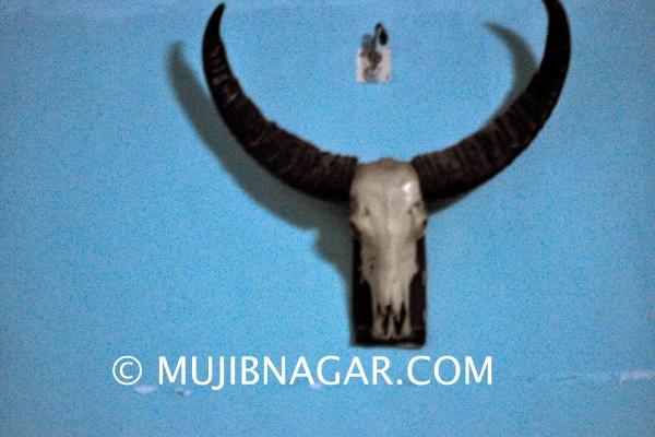 amjupi-nil-kuthi_00313488B80-D2FC-2D71-AC97-91E7B222ED22.jpg
