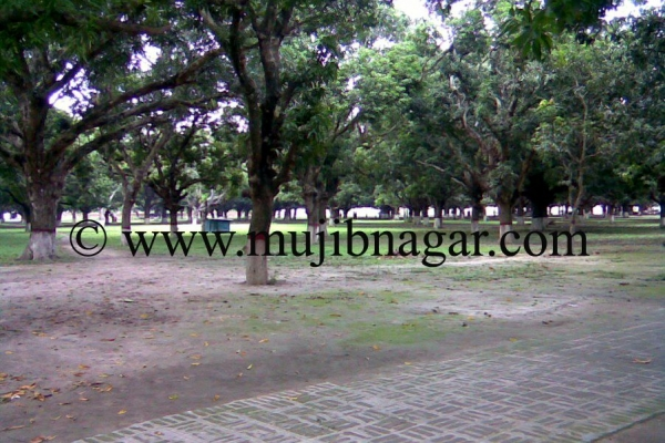 mujibnagar-mango-grove_39876DD43-77A1-4FDD-D85B-36D96BB8404F.jpg